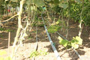 Bewässerung im Gewächshaus