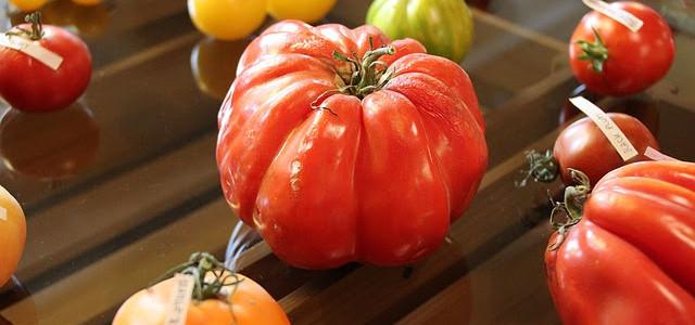 """Tomatenretter – ein """"Krautfunding"""" für Saatgutsouveränität"""
