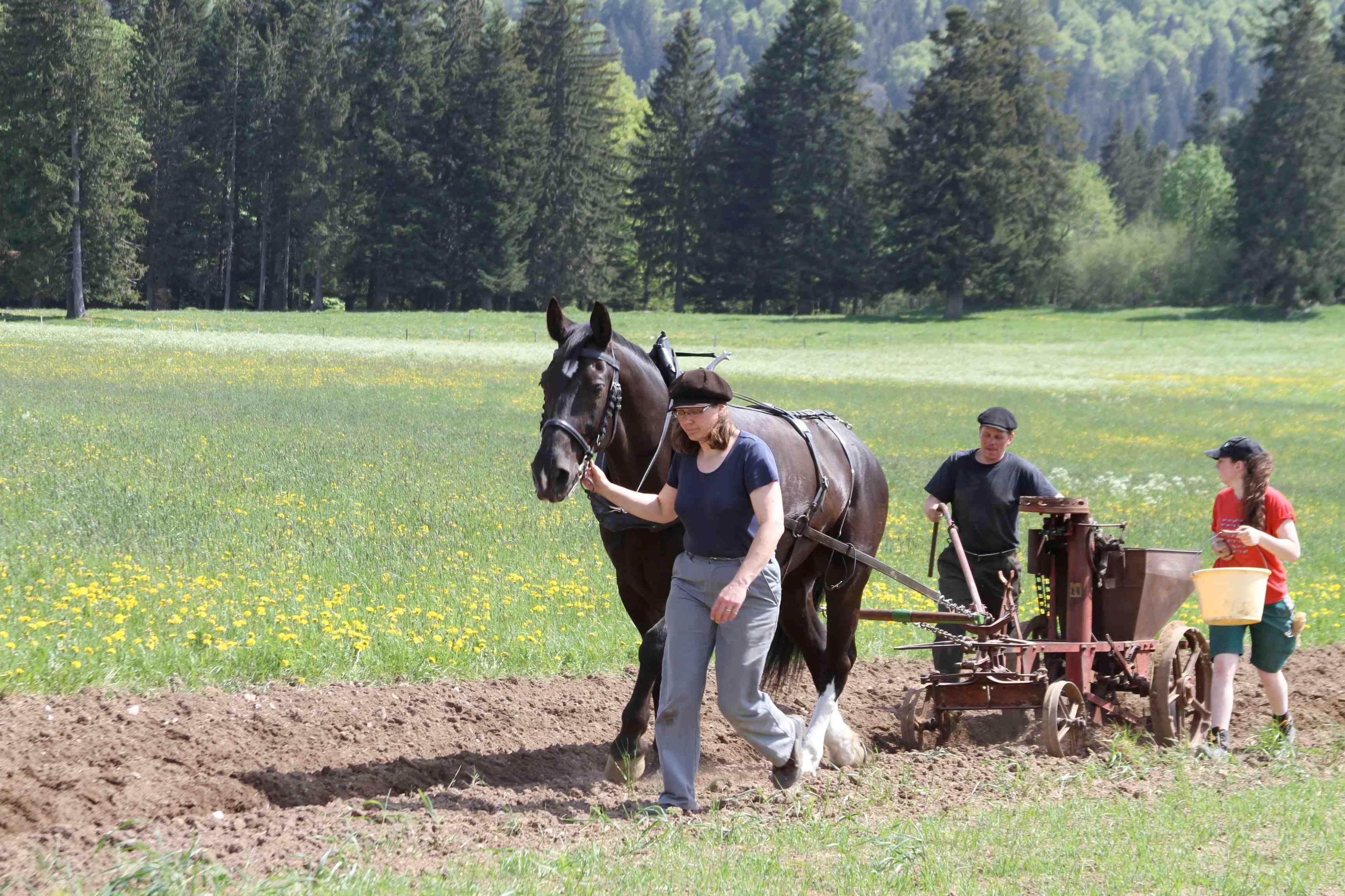 Pferdekraft in der Landwirtschaft