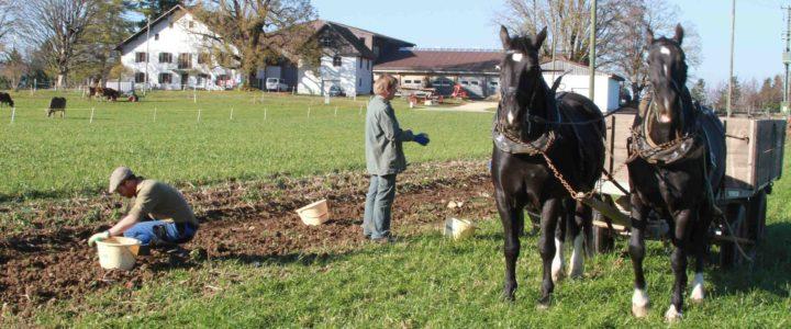 Bio-Hof Laas im Berner Jura – Mit Pferden leben und arbeiten