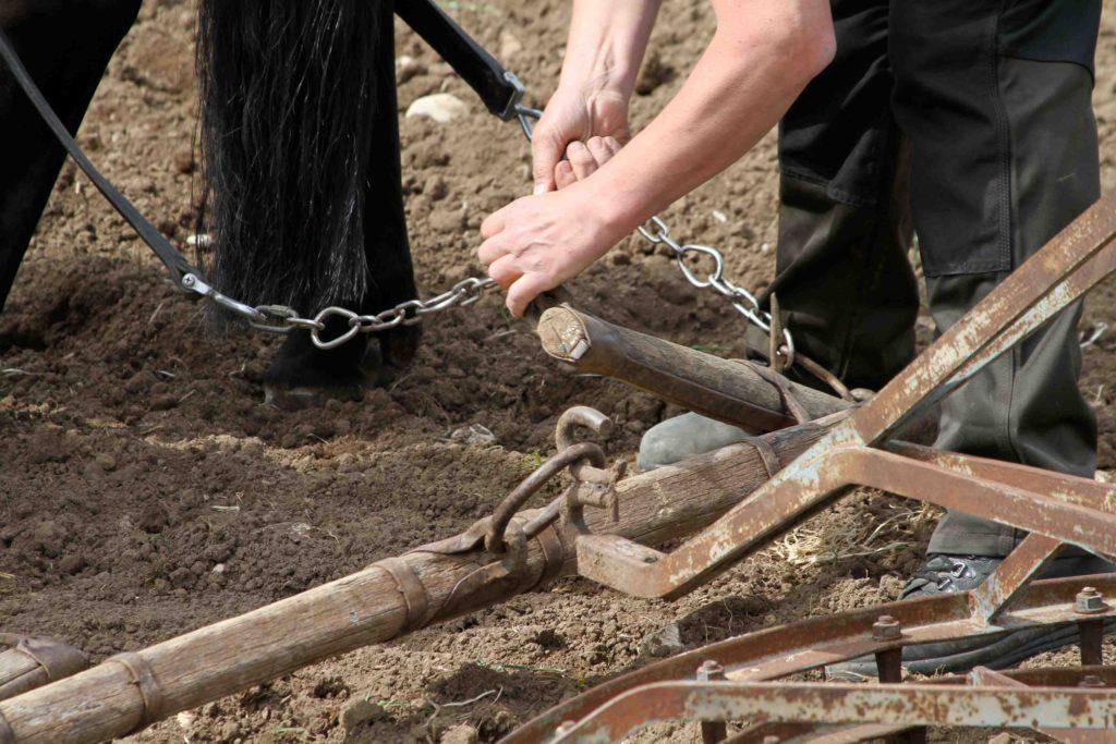 Pferde Ackerarbeit Sicherheit