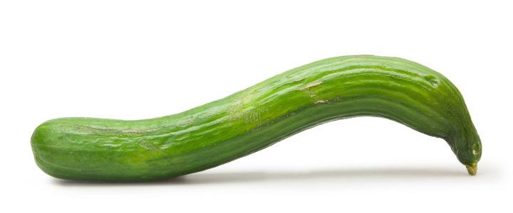 Verkaufe individuelle Gurken! Querfeld – ein Großhandel für krummes Gemüse