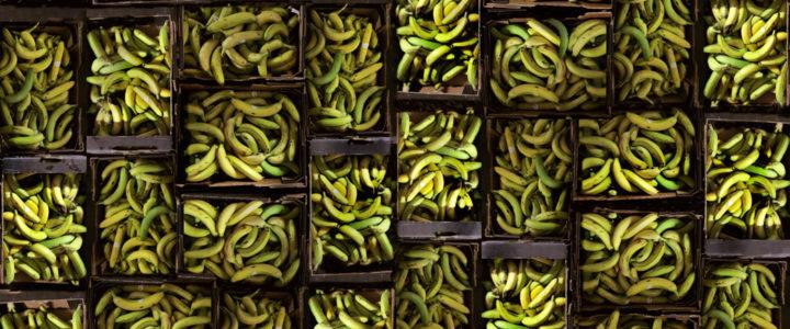 Diese 10 StartUps retten Lebensmittel vor der Tonne