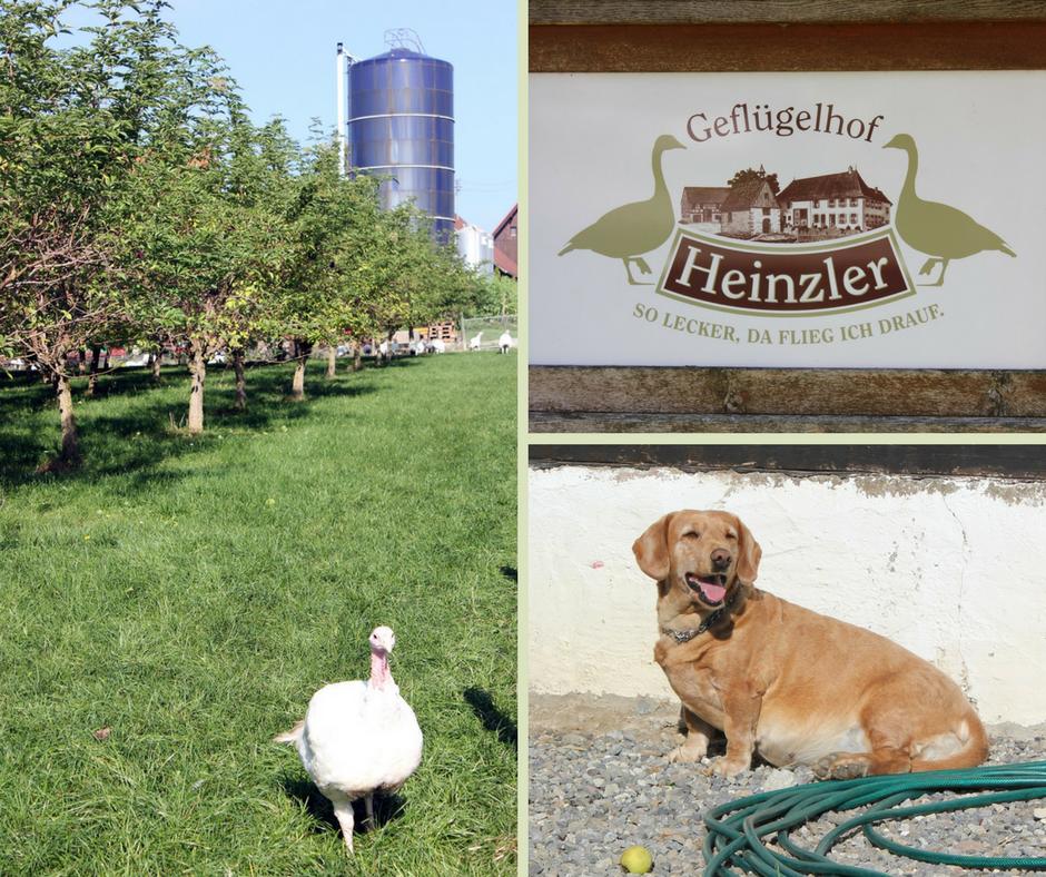 Landleben im Linzgau