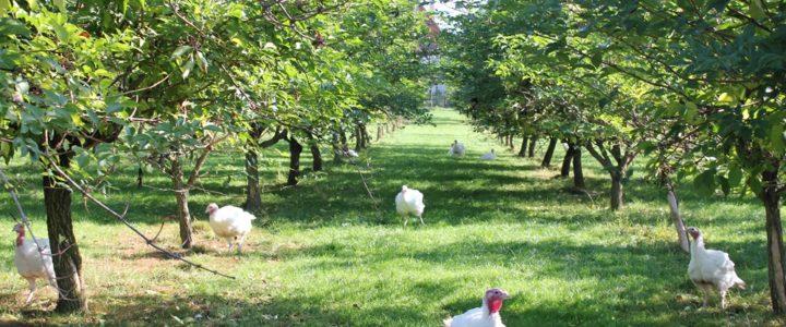 Naturlandhof Heinzler – Artgerecht ist nur Freiland