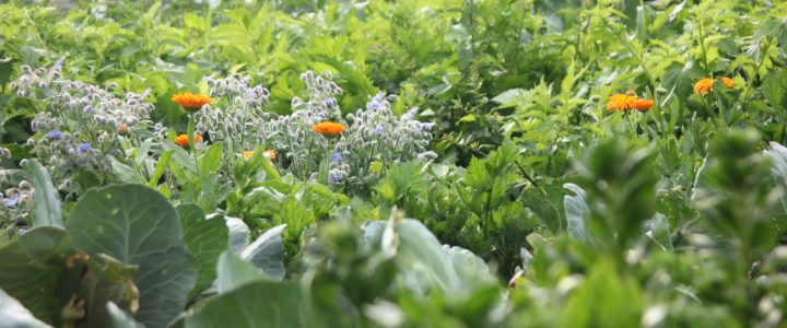 Der Mann, der Pflanzen liebt – Solidarische Landwirtschaft Fischbach & Deggenhausertal