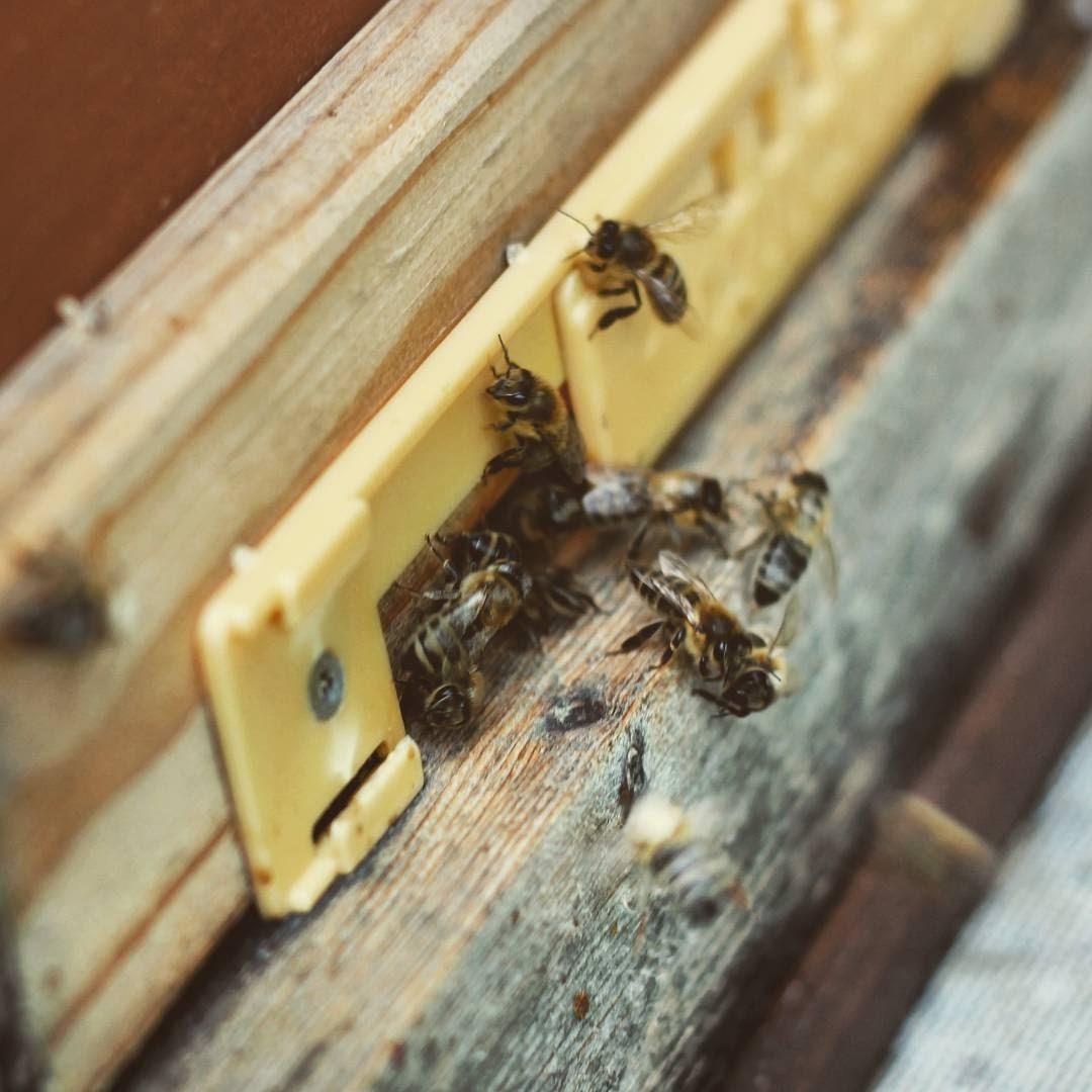 Honig Bienen Oberschwaben Yes We Can Farm