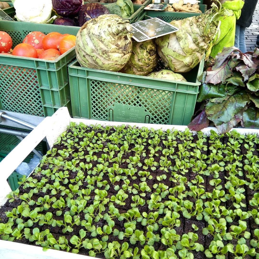 Gemüse Mayer Wochenmarkt Ravensburg Heimat Land Leben