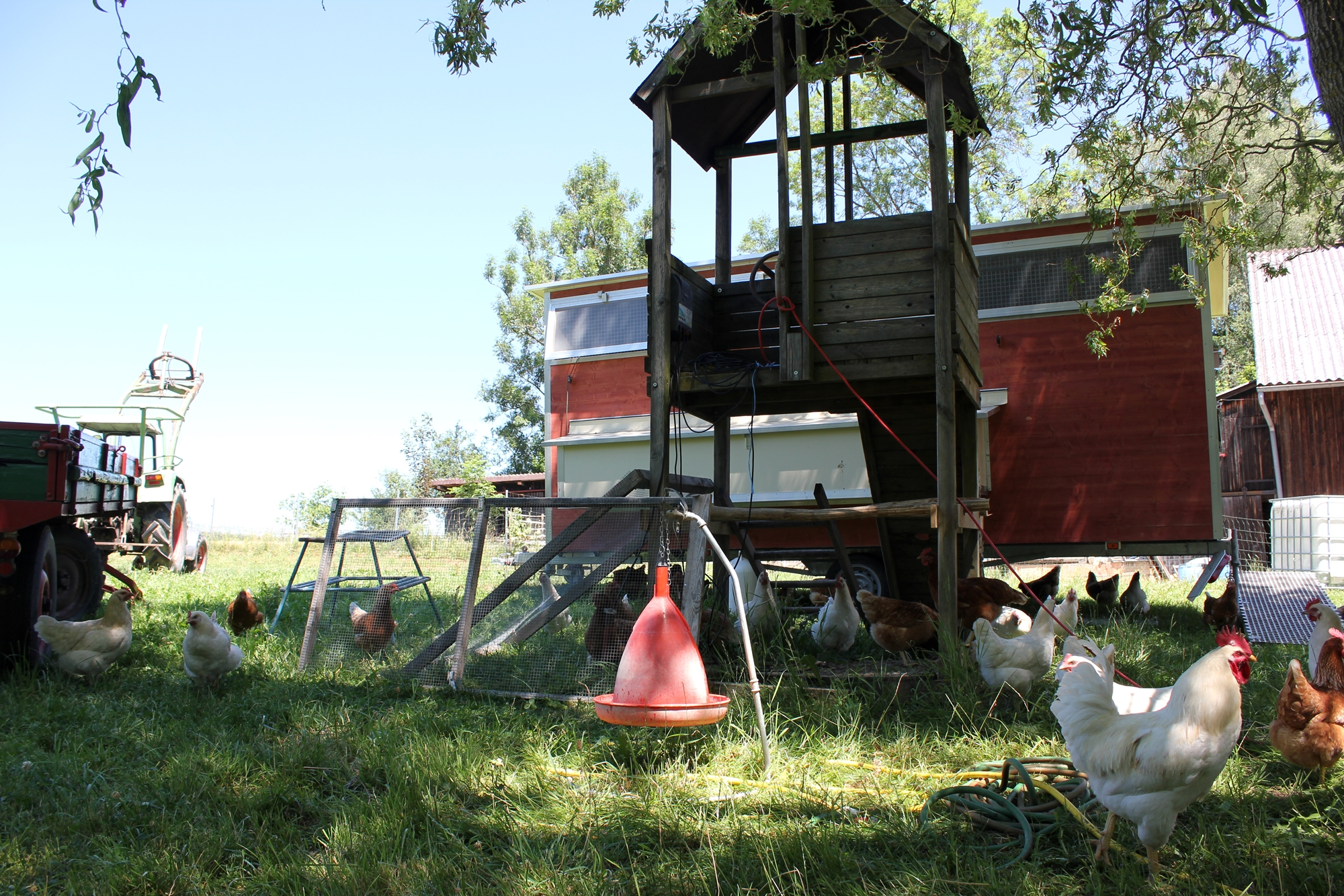 Idyllisch dient der alte Kinderspielplatz als Hühnerspielplatz, Familienhuhn Ravensburg
